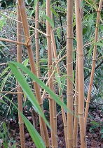 bamboo for textile applications and end uses