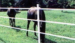 High density (HDPE) and high tenacity (GRET) polyethylene monofilament yarns for horse fence tapes and ropes
