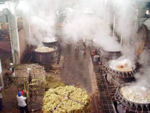 Hunan Isunte - degumming process of ramie fiber