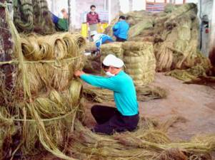 Hunan Isunte ramie raw material ready for spinning