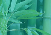 Bamboo plant to symbolize sustainability - Specialties with Swicofil, your global yarn and fiber expert